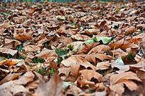 秋天地面上的落叶
