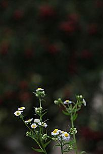 自然风景中的一只小花