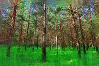 电脑油画《绿色松林》