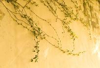泛黄的墙面