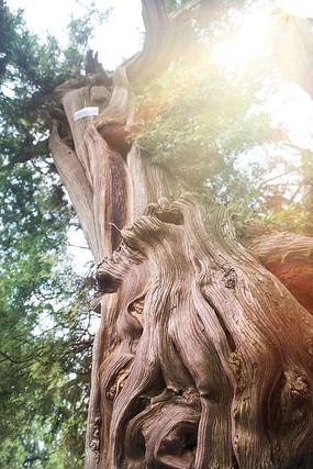 年代感树干