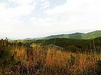 清明时节山上的野草
