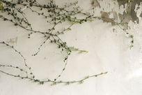 藤蔓斑驳墙