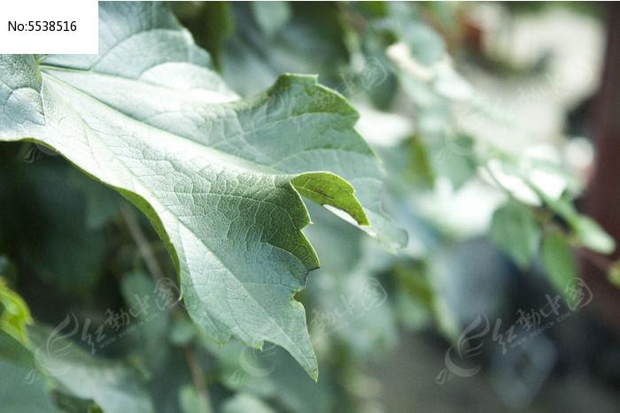 微距绿色树叶图片,高清大图_树木枝叶素材