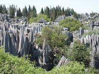 旅游景区石林