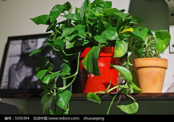 盆栽绿色植物图片,高清大图
