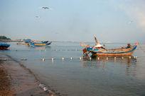 海滩渔船海鸥