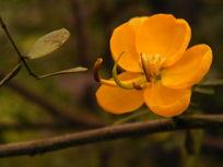 黄色的小花