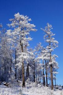 林海雪原松林雪景