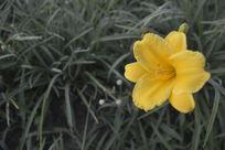 清晨草丛中的小花高清图