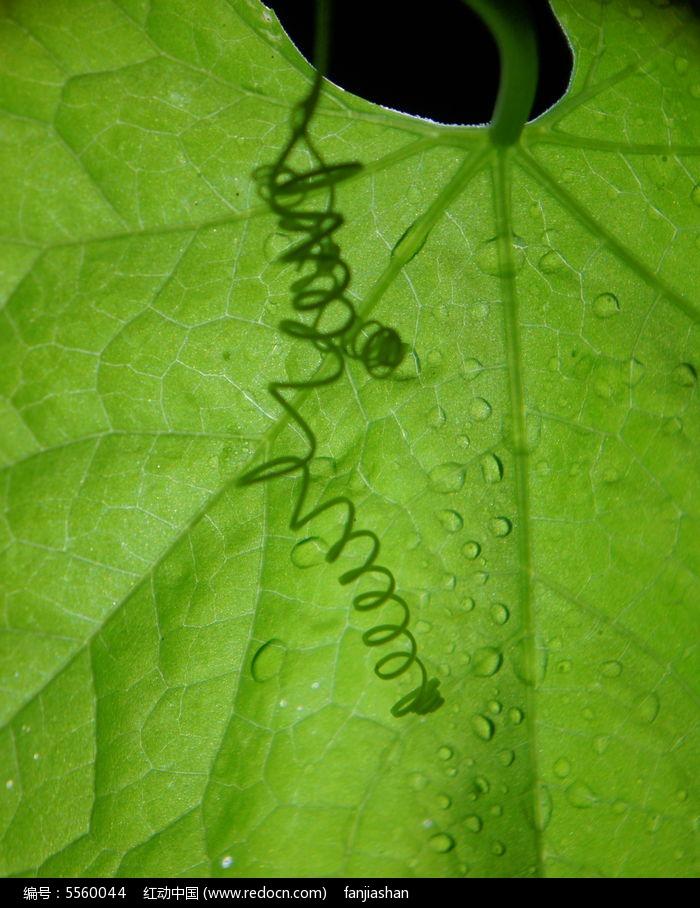 叶子上的一串影子图片,高清大图_树木枝叶素材