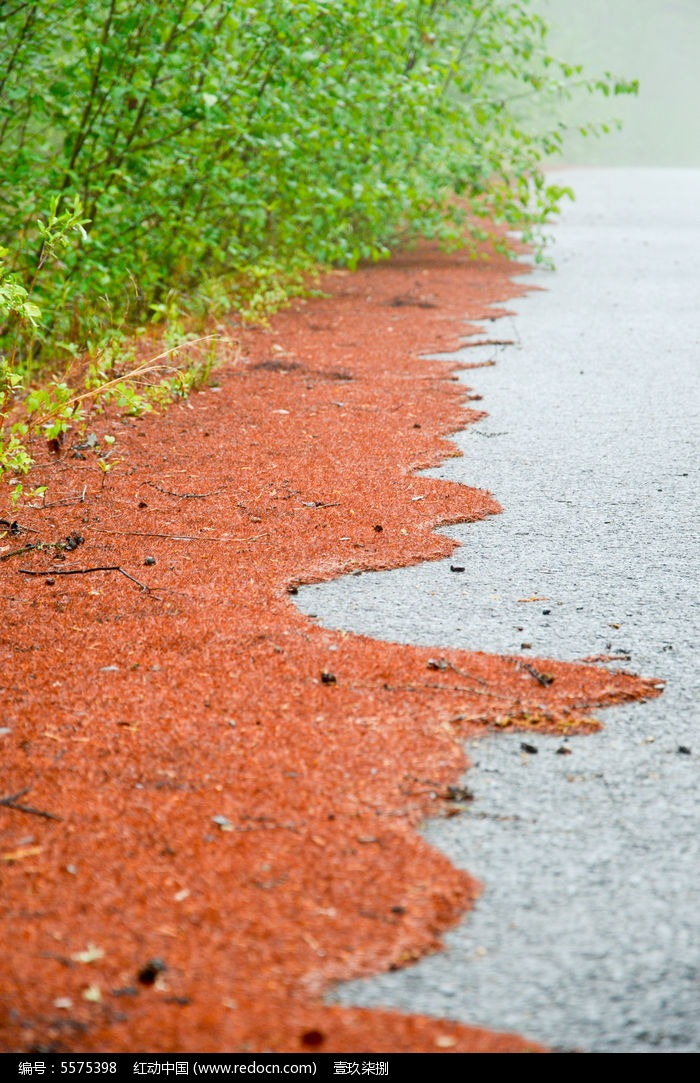 路旁松针图片,高清大图_森林树林素材