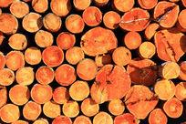 木材原木断面
