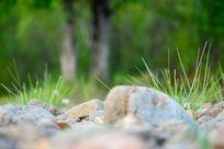 青草河边石