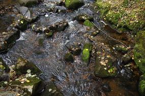 清澈的溪水