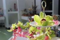 阿姆斯特丹郁金香花展室内郁金香花瓣