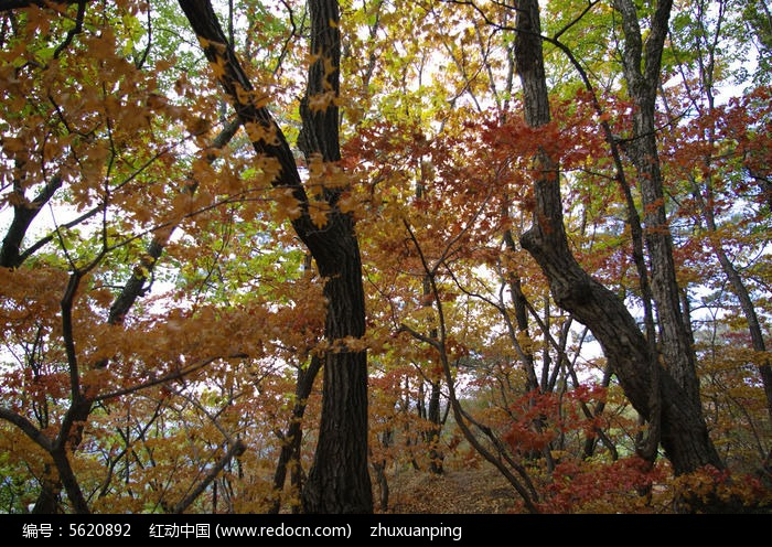 秋天的美景图片,高清大图