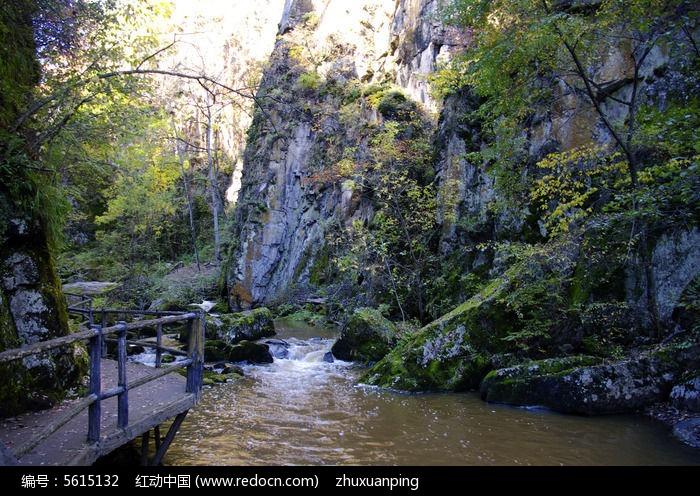 山涧峡谷图片,高清大图_森林树林素材