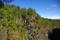 原始森林景色