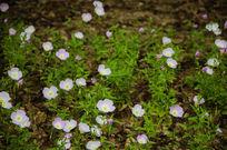 欣欣向荣的小花朵