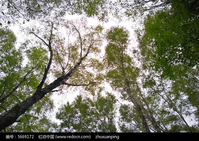茂密的树木枝叶图片