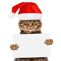 戴圣诞帽的猫图片