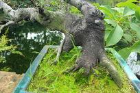褐色大树干