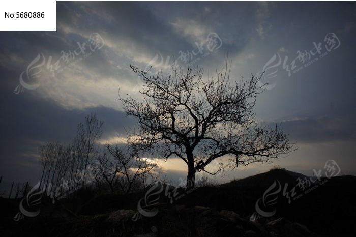 黄昏中的一株小树图片