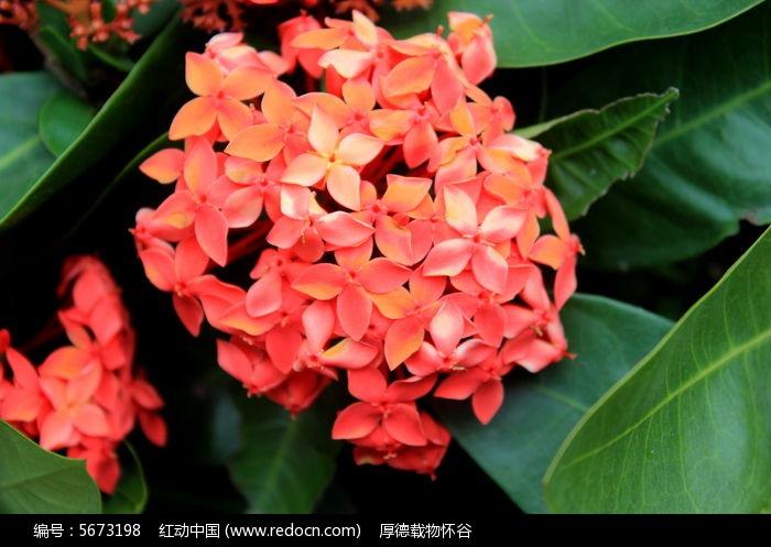 原创摄影图 动物植物 花卉花草 小红花