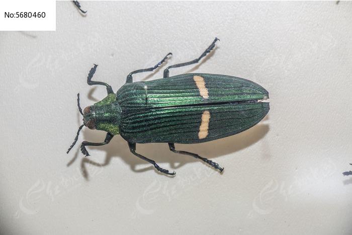 原创摄影图 动物植物 昆虫世界 眼睛甲壳虫