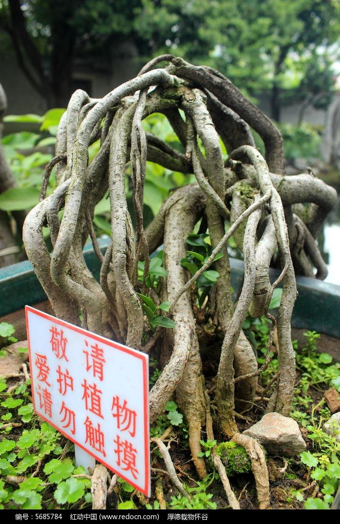 植物根茎图片,高清大图