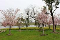 湖边的海棠林风景摄影