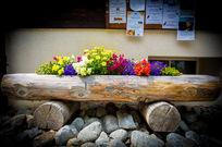 路边的鲜花