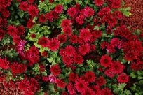 很多鲜艳的花