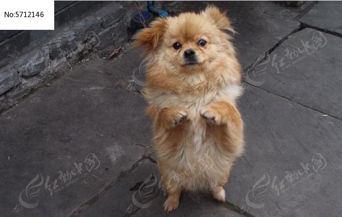 可爱小狗 宠物小狗狗图片