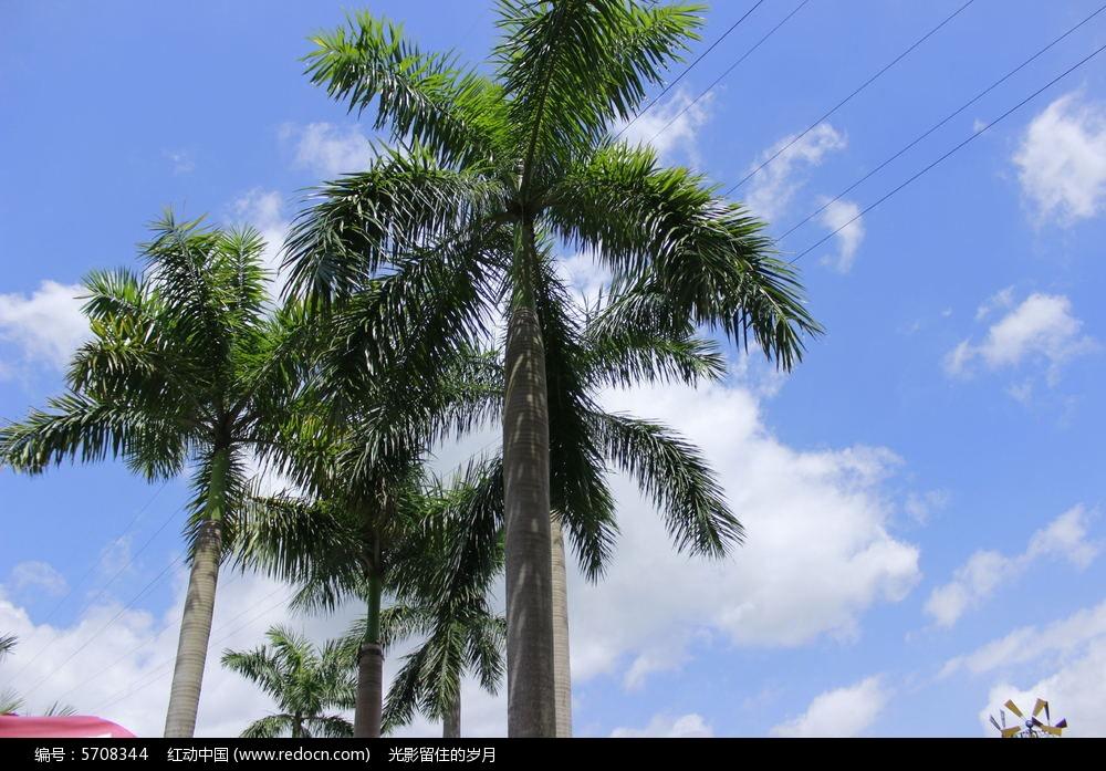 原创摄影图 动物植物 树木枝叶 蓝天棕榈树