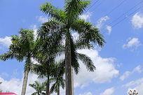 蓝天棕榈树