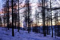 松林暮色夕照风景