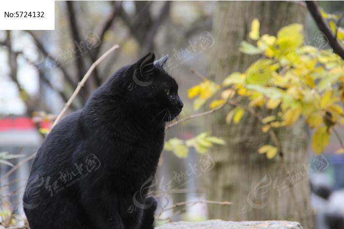 黑色猫咪图片,高清大图