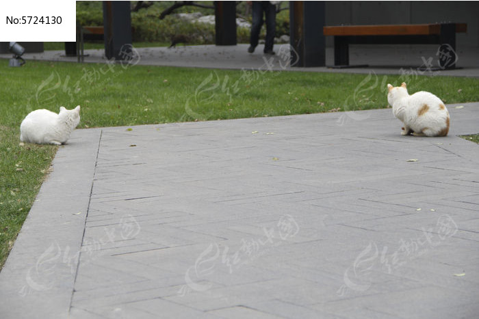 两个白色猫咪图片