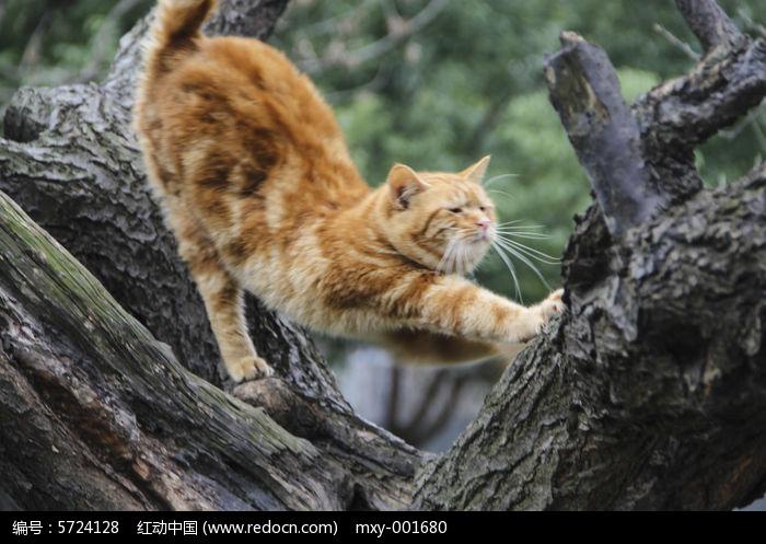 伸懒腰的猫
