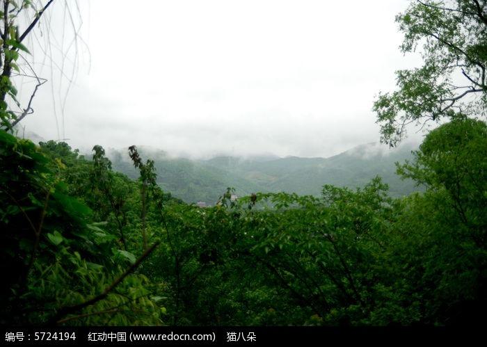 绿色森林图片,高清大图_树木枝叶素材