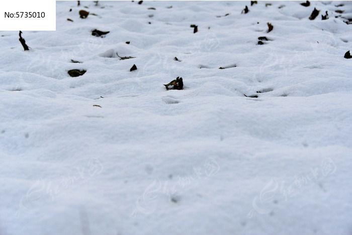 冰天雪地图片,高清大图