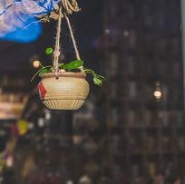 冬日的睡莲