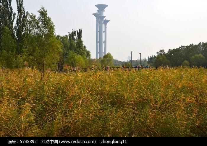 奥森公园图片,高清大图_树木枝叶素材
