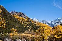 秋色满园的四川风格