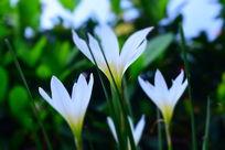 仰拍白色小花