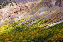 长白山火山森林地貌