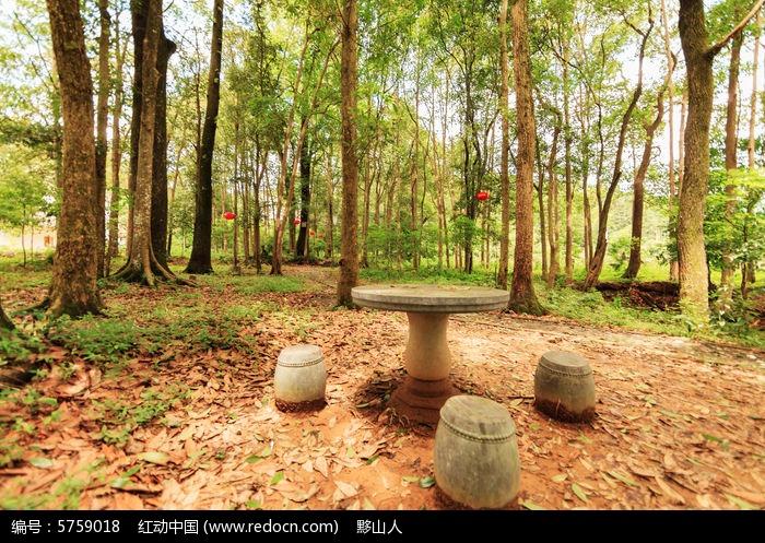 稀有的金丝楠木林图片