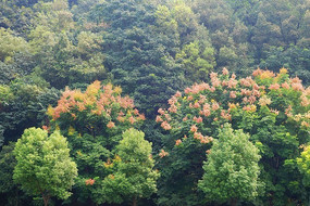 张家界市郊森林秋季风光